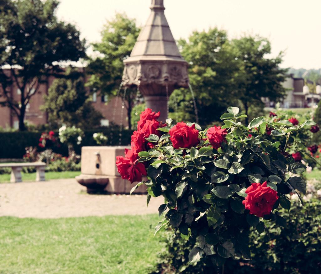 Duluth Rose Garden Fountain Roses Duluthmn Sharon Mollerus