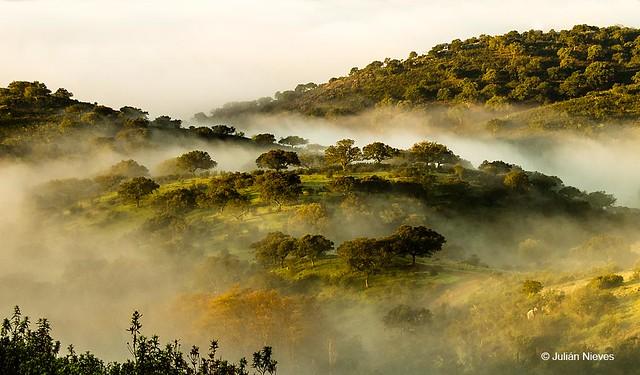 Niebla en Monfragüe