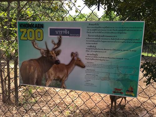 ขอนแก่น สวนสัตว์ esarn isaan khonkaen thailand zoo