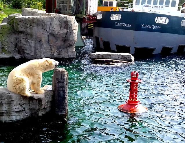 Eisbär im Hannoverschen Zoo-gibt es nur noch einen?