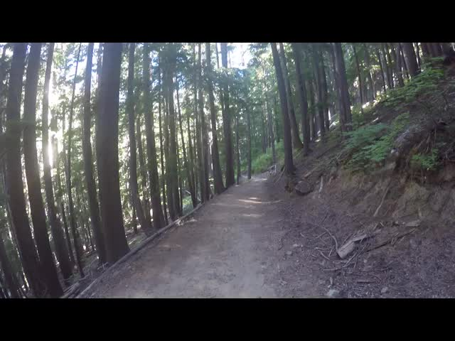 5562 GoPro video of hiking through a tall pine forest on a steep slope on the lower Phelps Creek Trail