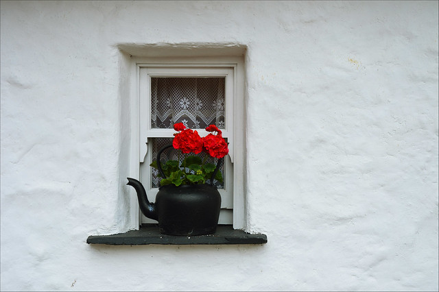 Teapot in blossom