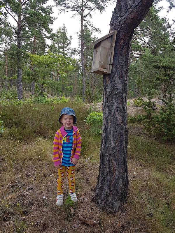 Sander och farfar byggde fågelholk