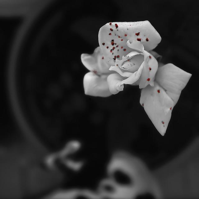 Rambla de les flors