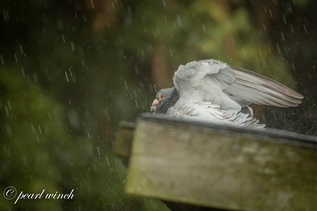 Enjoying the rain