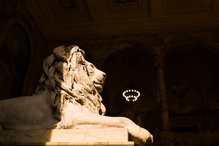 Lion | by Phil Roeder