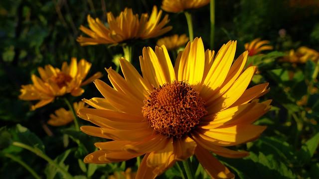 Zachód słońca i kwiat.