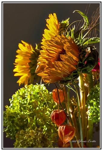 nature sunflowers flowers colour color beauty canon