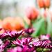 Fleur couronné de succès