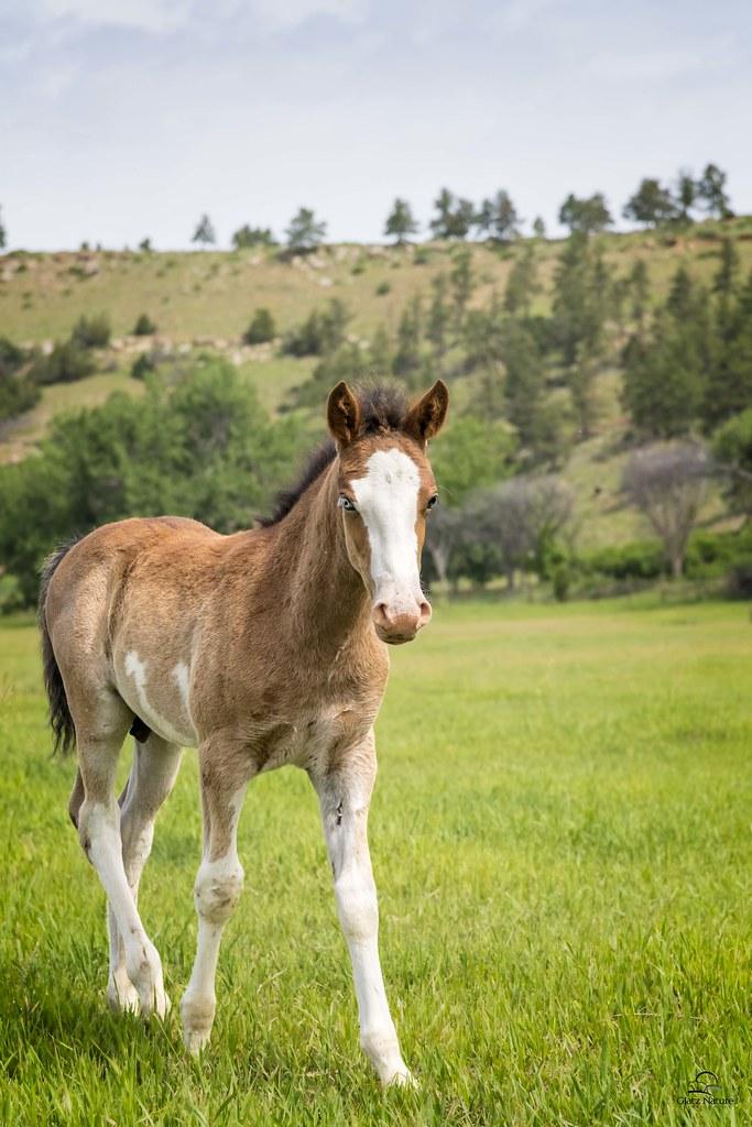 Black Hills Wild Horse Sanctuary Tumblr