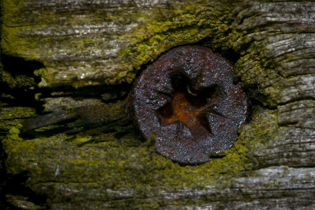 Just a rusty screw head