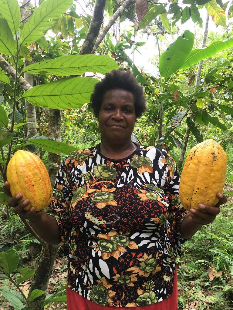 Pertanian dan Panen Kakao di Provinsi Papua