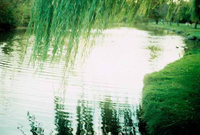 Down by the Water, Under the Willow
