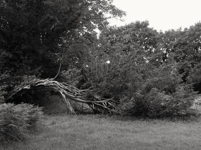 Vous etes vous déjà demandé comment les arbres dorment ? Have you ever wondered how trees sleep?