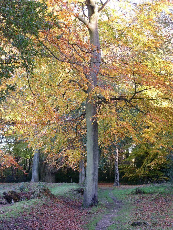 Ranmore Common