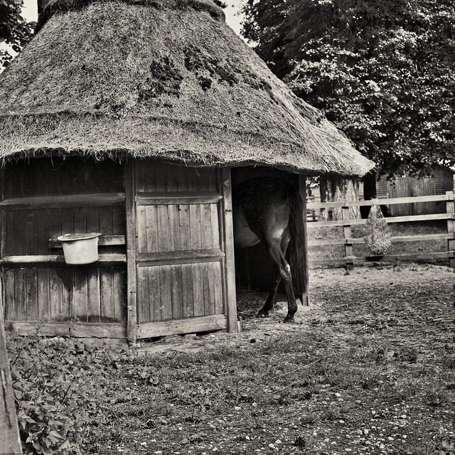 Ascott House horse at home