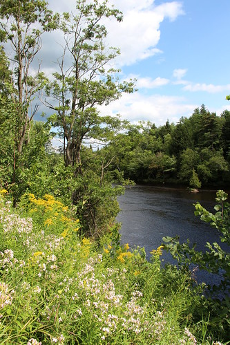 usa new york state saranac river forest landscape nature trees fields