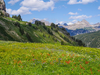 Tetons! and Death Canyon. And wildflowers or w/e | by snackronym