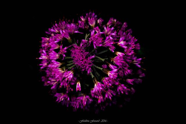 Rosace Florale