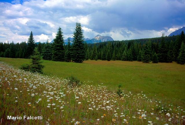 Canada: Kootenay National Park: Kootenay Valley