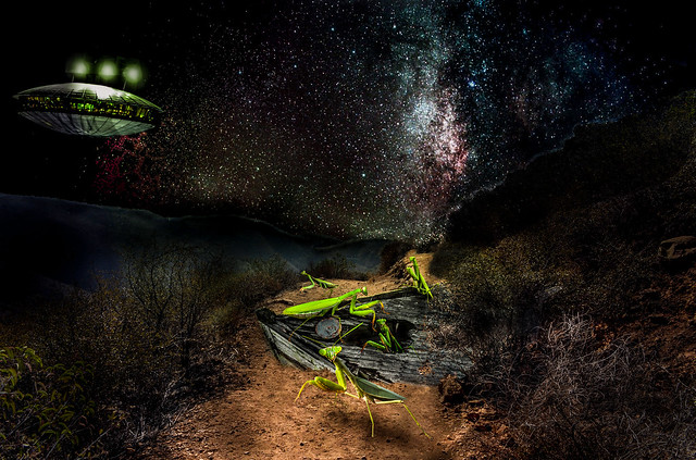 Mantis from out of space.