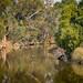 Napa River Wild