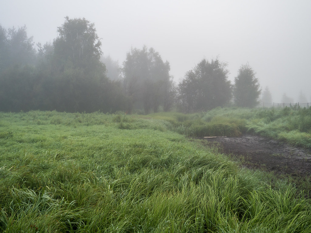 Foggy Day at Creamer's Field 07292017 Shared-2
