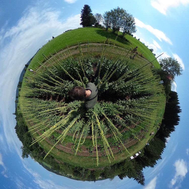Vosges planet