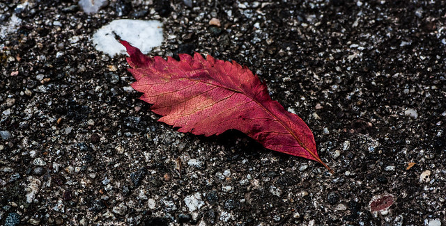 first signs of autumn