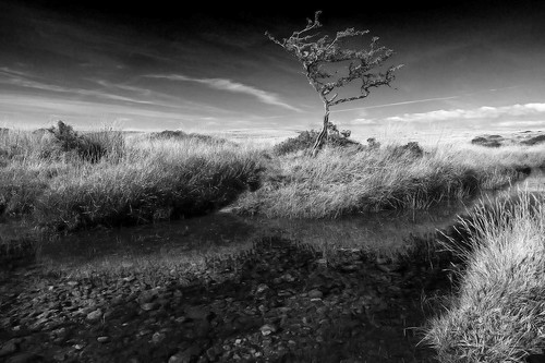 tree blackandwhite mono monochrome bw dark isolated desolate water reflections moor dartmoor nationalpark devon uk england canon50d pebbles stones wilderness remote quite calm streakyclouds gnarly landscape tamron 1750mm gidleigh outdoor hiking north teign river scorhill walk clear late summer sunny contrail weathered gnarled transparent