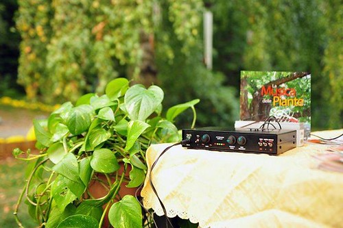 the device for the music of the plants