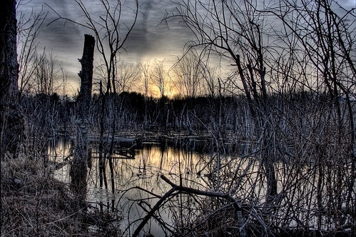 swamp.jpg | by Lawrence Whittemore