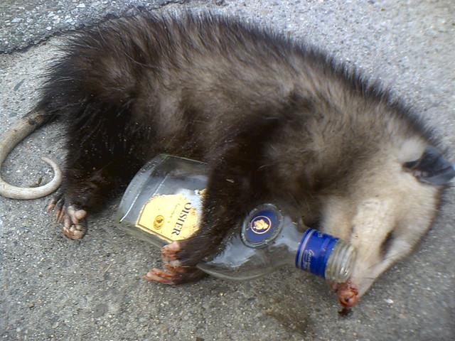 dead possum with courvoisier, marina del rey, california