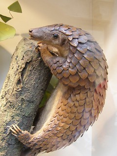 Pangolin Model | by veracious jess