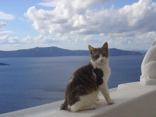 SANTORINI - CAT