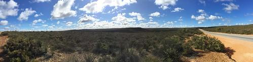 wa outback westernaustralia kwongan