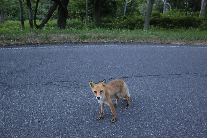 2014-07-21_01517_北海道登山旅行.jpg