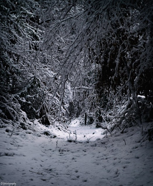 S'enfoncer dans les bois