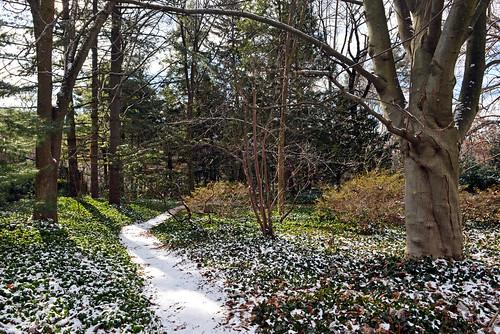 newyorkcity wavehill botanicalgarden bronx forest naturewalks trees magnoliatripetala tsugacanadensis