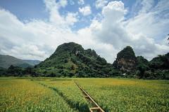 Rice Fields & Mountains, Lai Châu Vietnam
