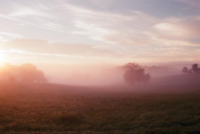 Veiled In Mist