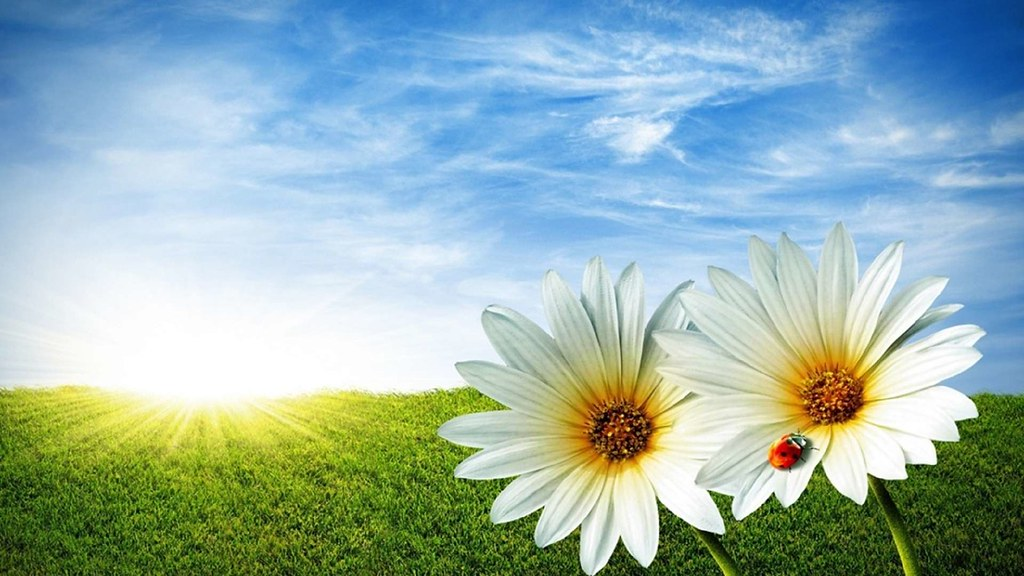 Summer Flowers Wallpaper Beautiful Flower Pictures Downl Flickr