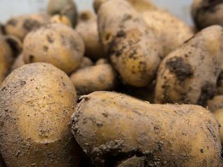 Fresh potatoes   by Elise de Korte