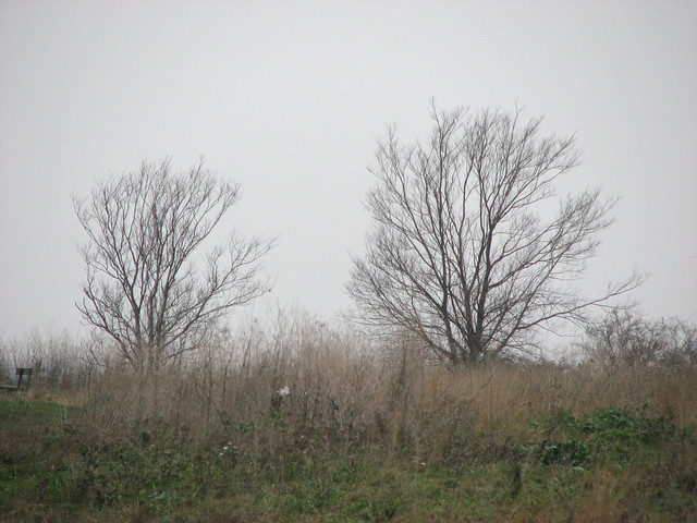 Two Trees on Two Tree Island