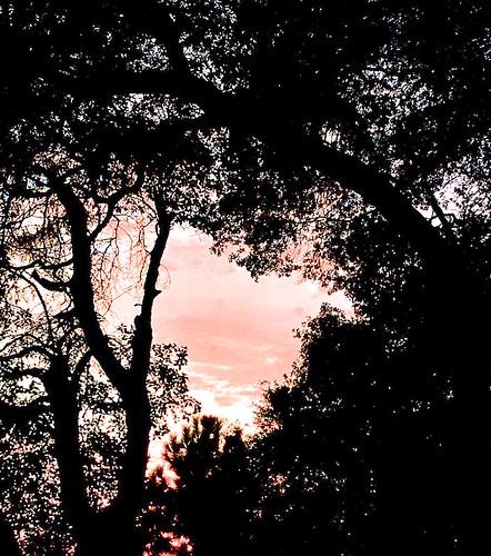 sunset skies pink redmuleranch fiddletown ronscofieldscowboycampfire