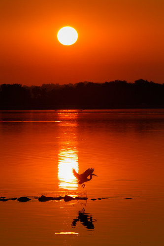 2017 canon eos7d horseshoelake illinois midwest september bird birds morning pelicans sunrise pontoonbeach unitedstates us