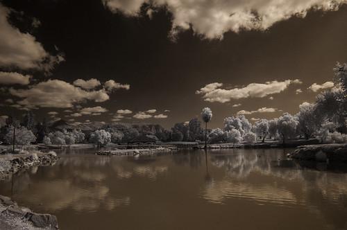infrared infraredphotography convertedinfraredcamera clouds water vegetation reflections nature naturalbeauty lakeside