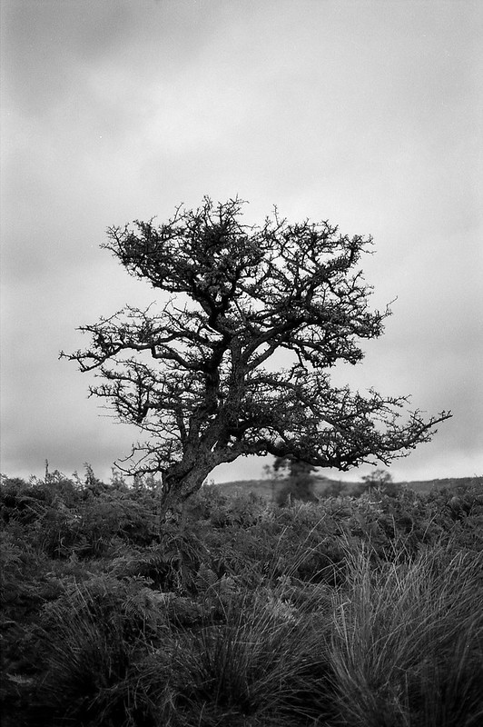 FILM - Trees at Longshaw-3
