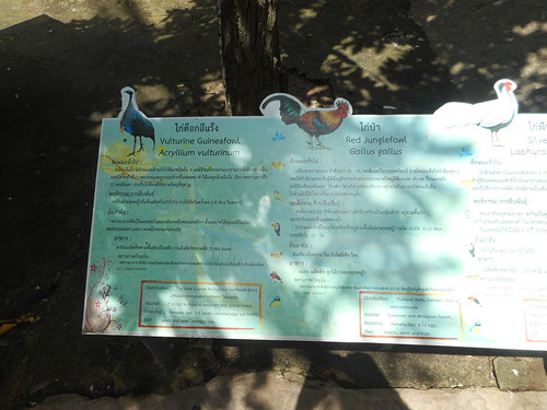 ขอนแก่น สวนสัตว์ animals birds esarn isaan khonkaen thailand zoo