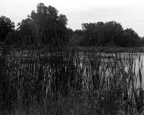 august summer 2017 analog film ilford fp4 120 medium format mf mamiya rb67 pro s classic camera 127 mm nikon super coolscan 9000 ed outside cans2s marsh swamp amherstburg ontario canada landscape rural nature trees water